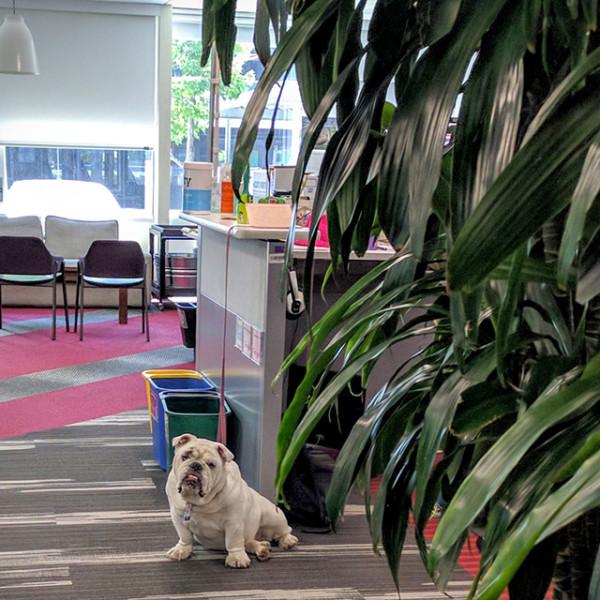 googleplex-google-dog-1466540796